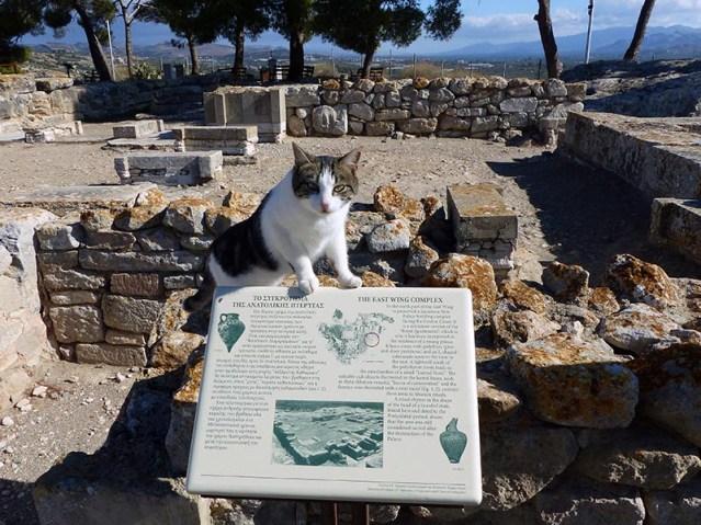 Phaestos feline guide 4, Crete, Greece - Jen Funk Weber