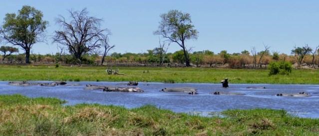 Hippo habitat, Khwai River, Botswana