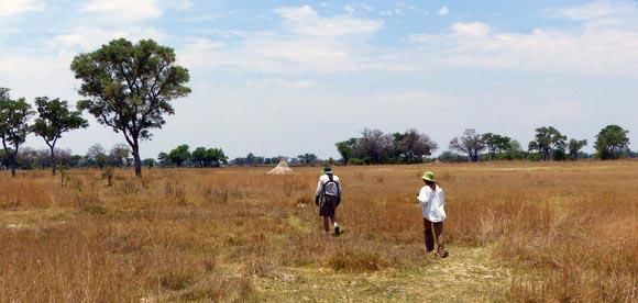 Walking to the carmine bee-eater nesting site, Okavango Delta, Botswana