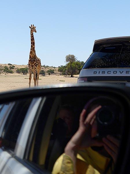 Giraffe approaches waterhole with lions nearby, Kgalagadi Transfrontier Park, photo by Mike Weber, Jen Funk Weber