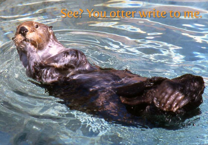 Sea otter suggesting you otter write to me.
