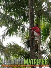 Pemanjat kelapa