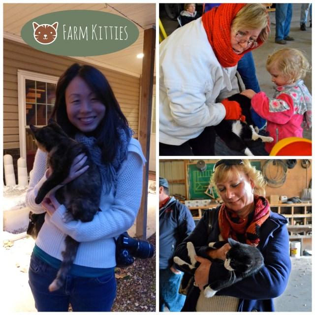 Farm Kitties Collage