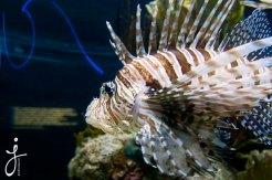 JLongo_Aquarium_1055_WEB
