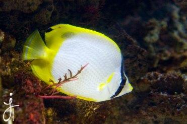 JLongo_Aquarium_1395_web