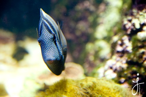 JLongo_Aquarium_890_web