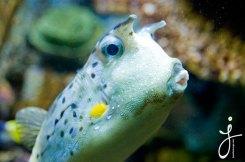 JLongo_Aquarium_933_web