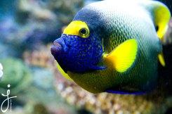 JLongo_Aquarium_942_web