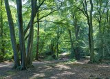Epping Forest2