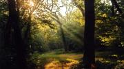 Epping Forest4