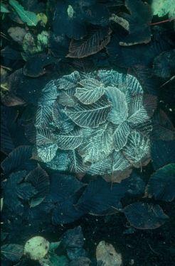 BotanyAndyGoldsworthy2