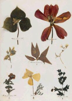 BotanyEmilyDickinson'sHerbarium