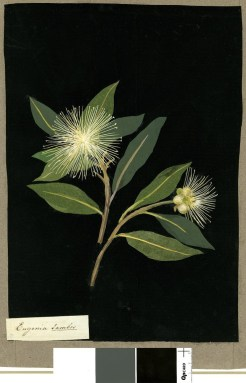 BotanyMaryDelany