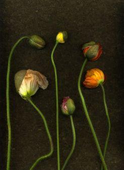 BotanyShelleysDavies