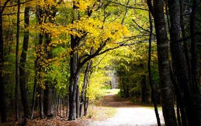 Fall = New Beginnings