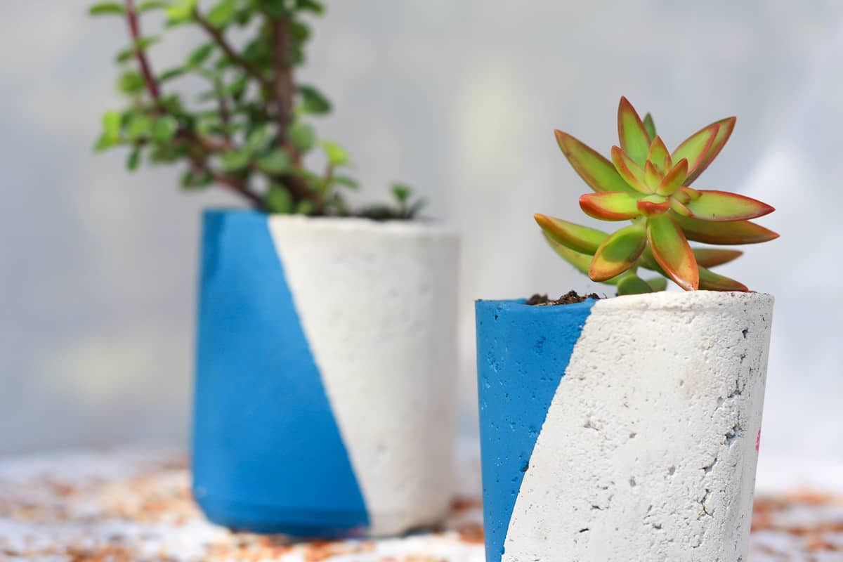 2 concrete planters painted on the diagonal with blue paint, containing soil and various succulents