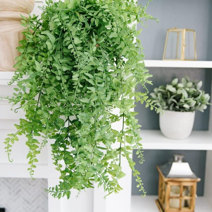Thick green foliage hanging from a terra cotta pot, sitting on a white fireplace mantle