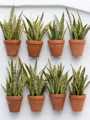 easy house plants that you won't kill