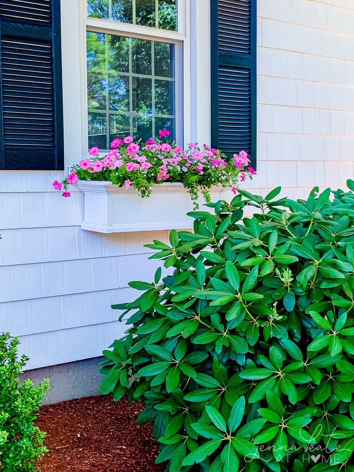 Pink flowers in a summer window box on the front of a white house