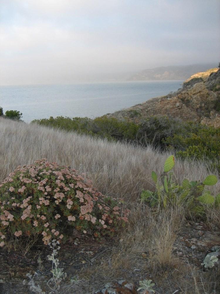 Santa Cruz, Channel Islands, California