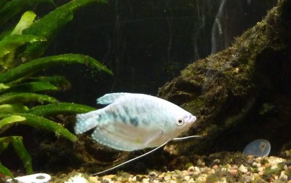George8-7-2012