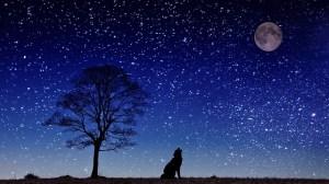 dog-moon-howl-647533_640