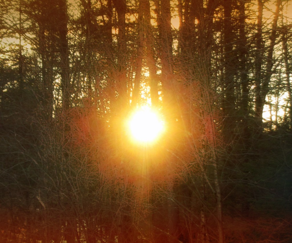 Sun showing through trees at dawn, on the Winter's Solstice