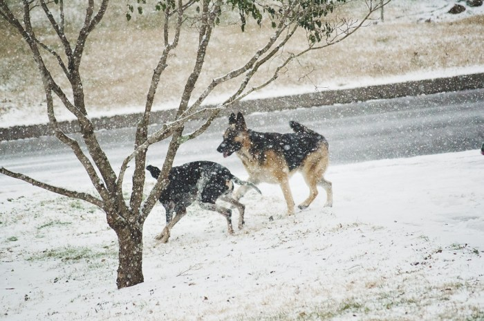 Major and Zeus in the snow