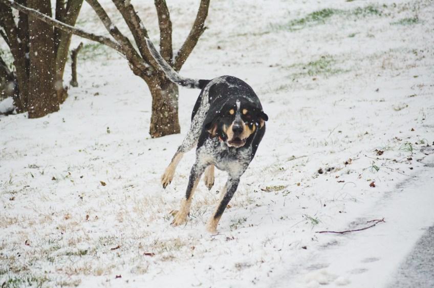 Major in January snow