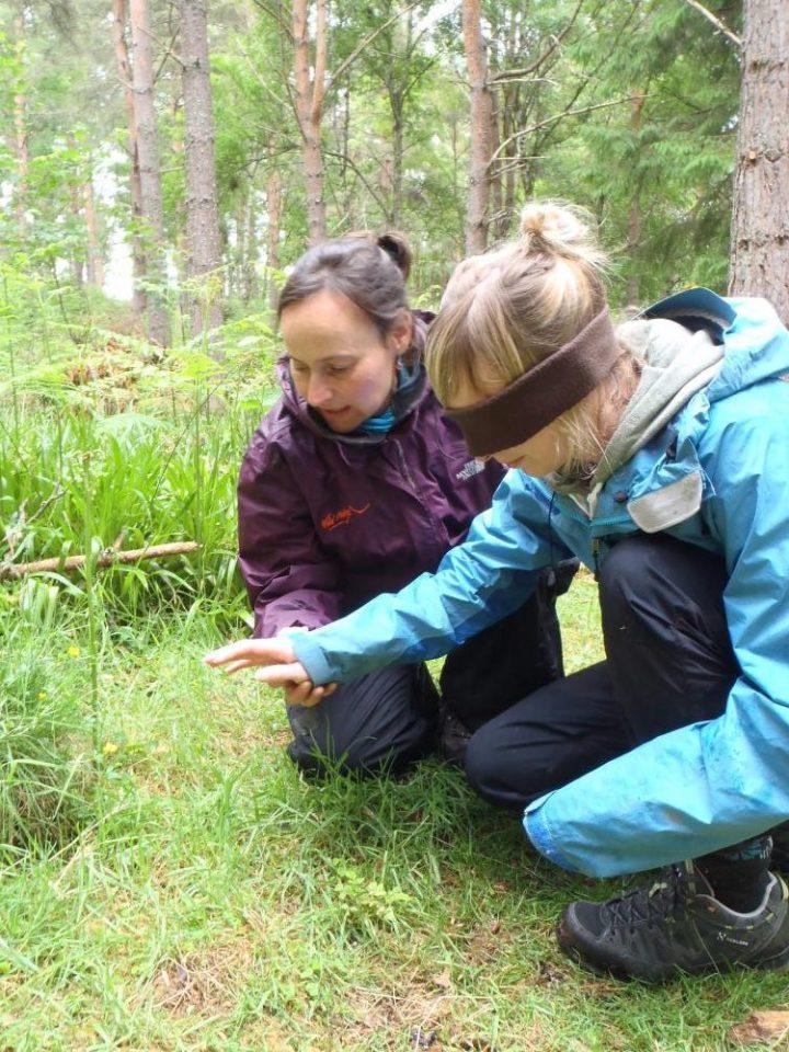 Jennie Martin: Wild things! Woodland Activity Leader Training