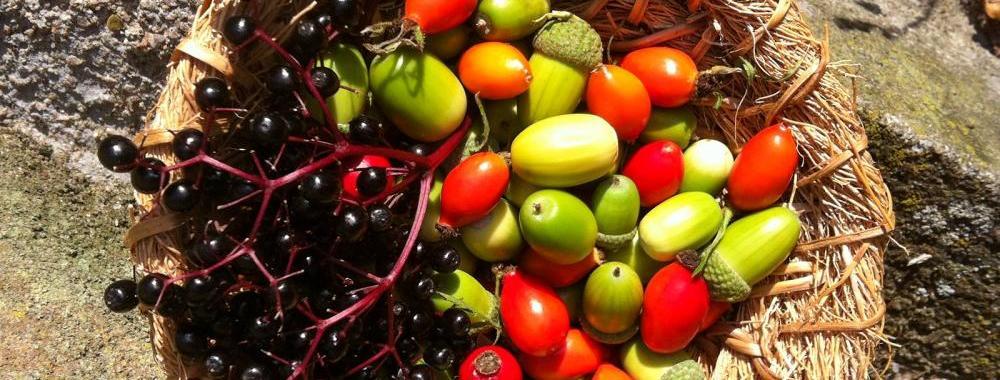 Wild Food Jennie Martin Ethnobotany