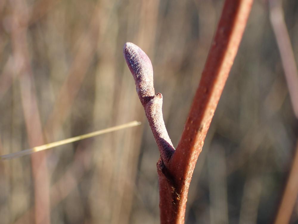 Winter Tree Identification Workshop Moray