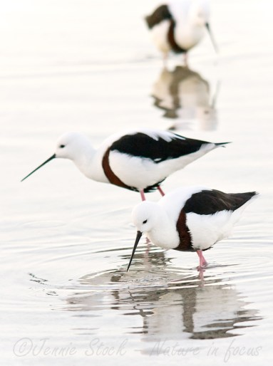 Banded stilts and reflections