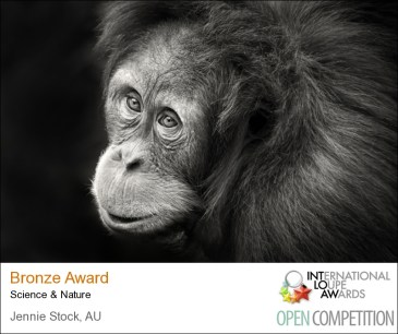Orangutan photographed at the zoo - score of 83 in Loupe Awards, with range from 70 to 95.