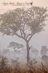 Eerie bushveld in the morning mist