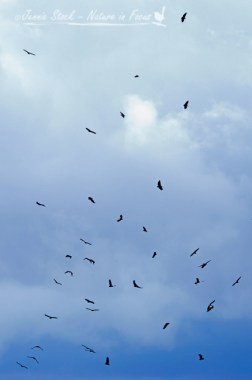 Vultures circling far away