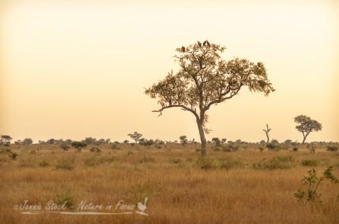 African savanna evening light