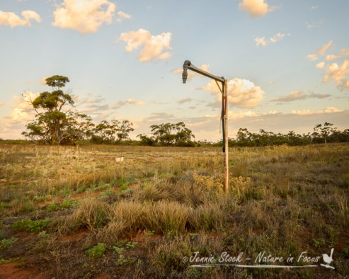 Water pump at sunrise