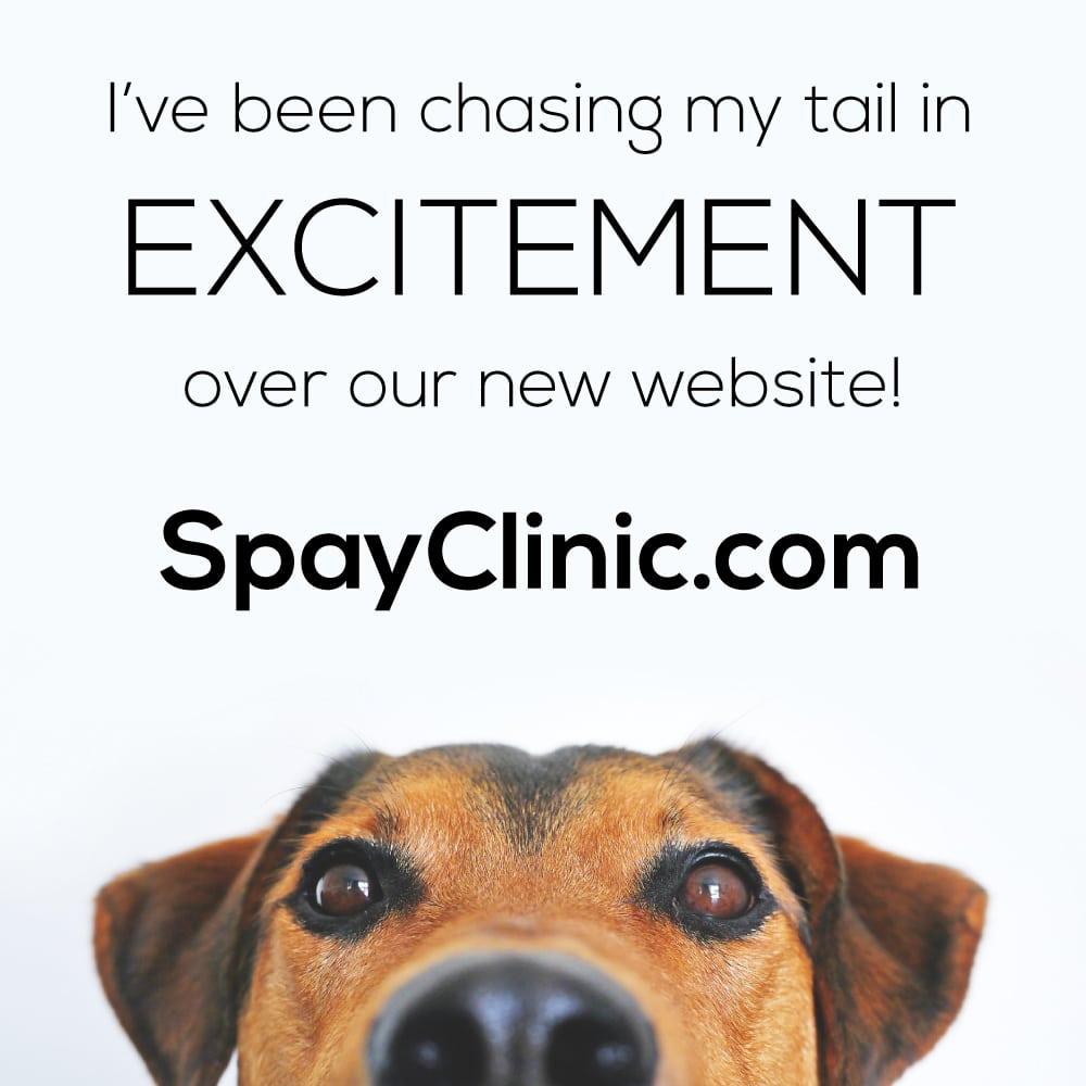 spay-clinic-new-website-social-media