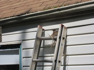 No more cleaning the gutters!