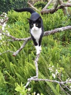 magic-on-plum-tree-best-photo