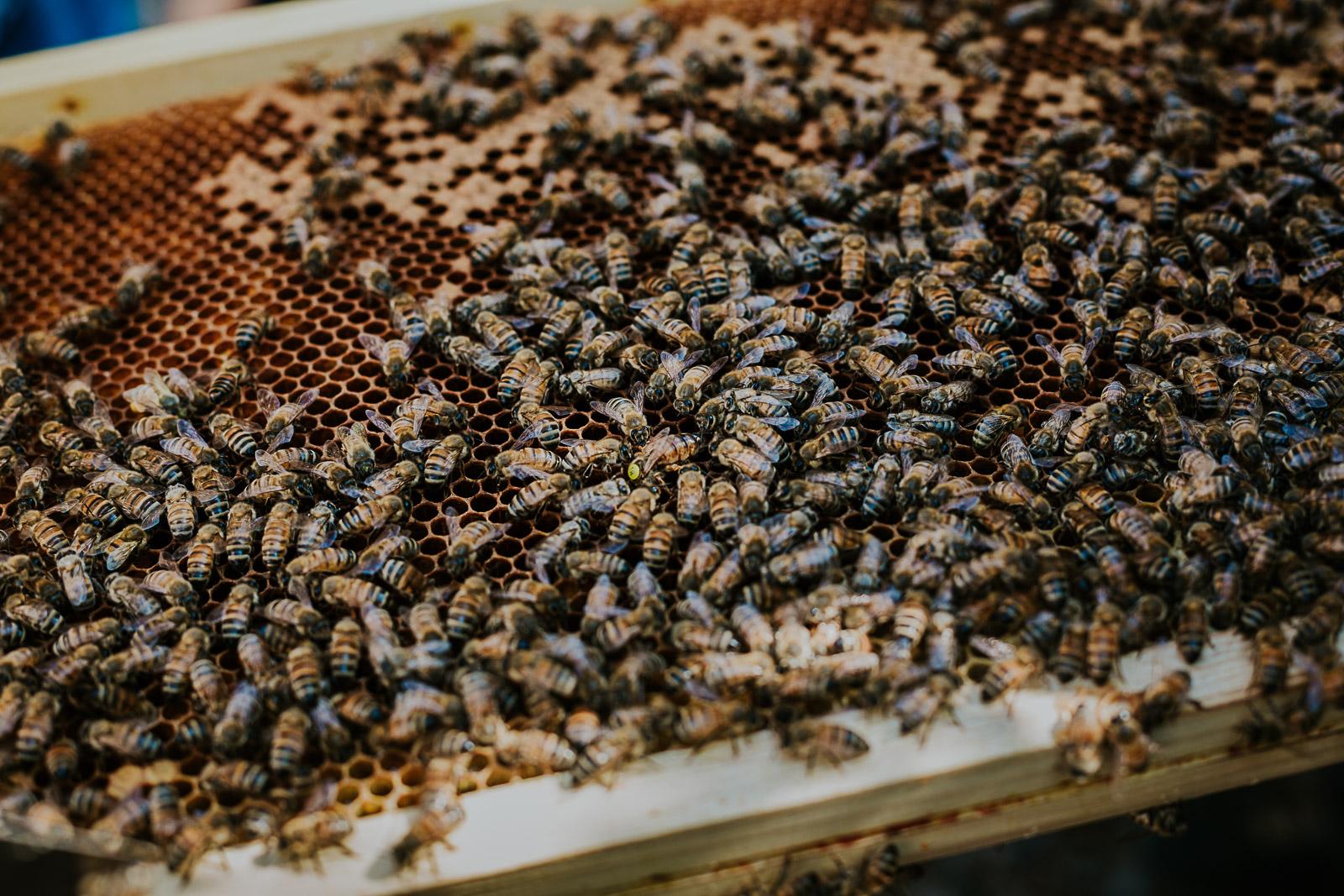 bd-bees-22