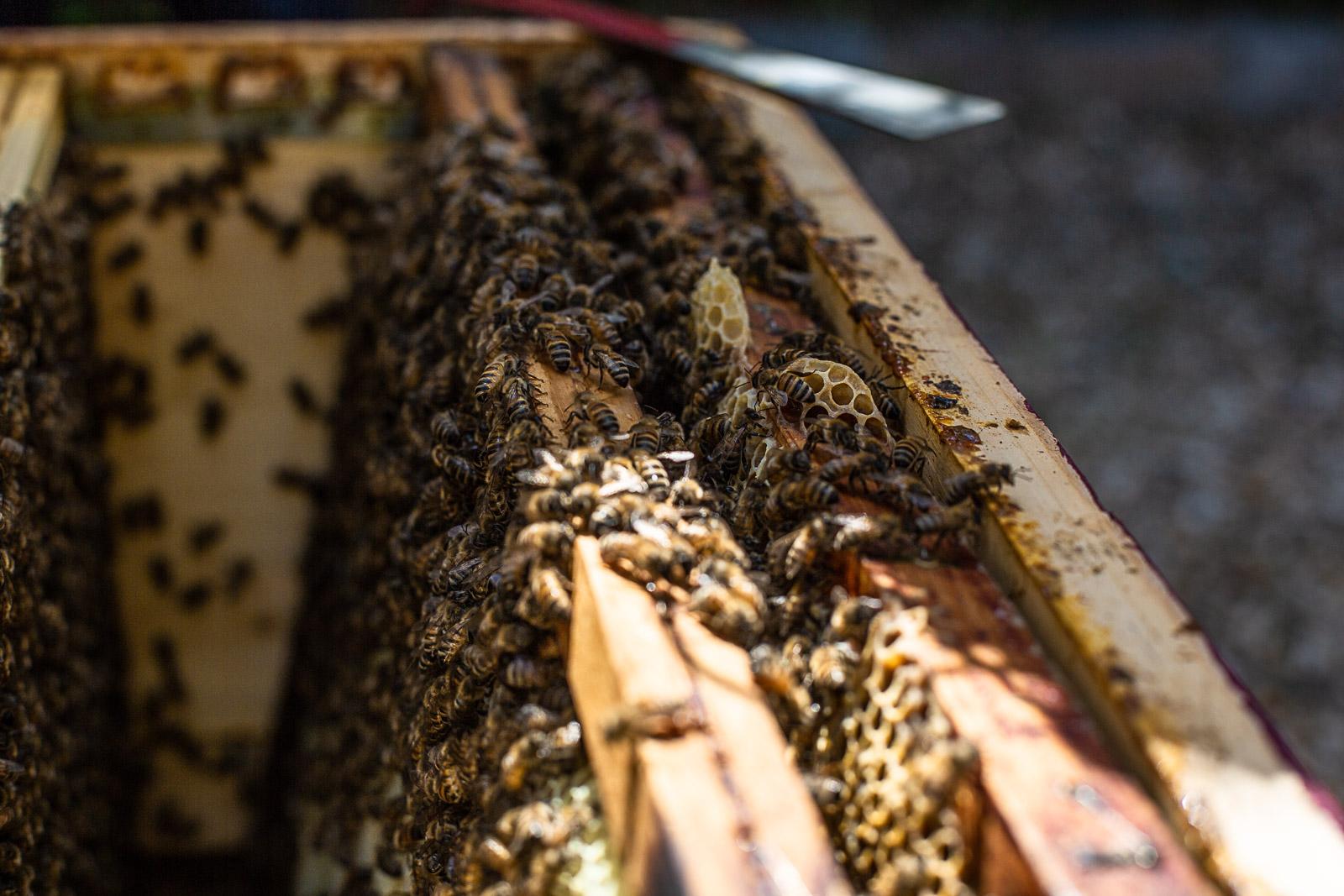 bd-bees-27