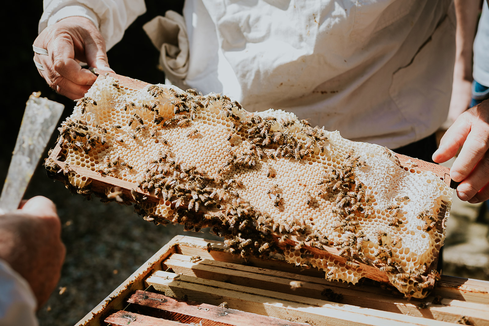 bd-bees-39