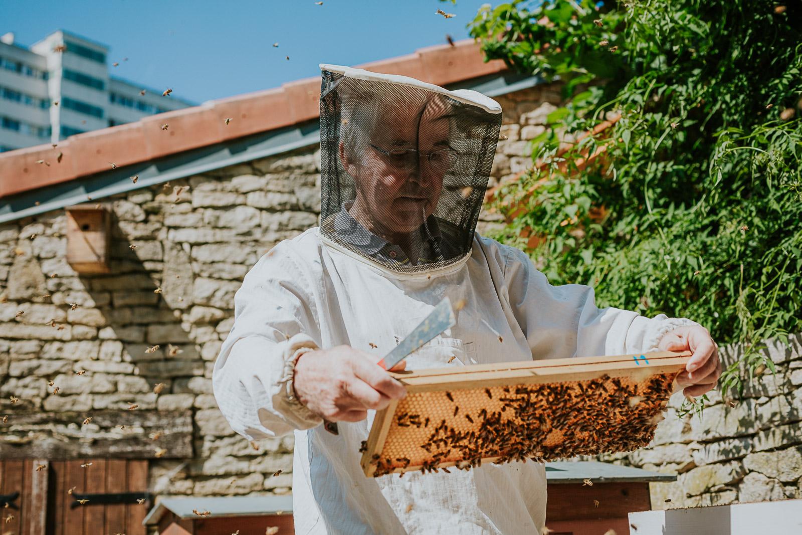 bd-bees-60
