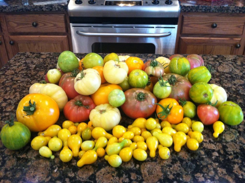 heirloom-tomatoes-harvest