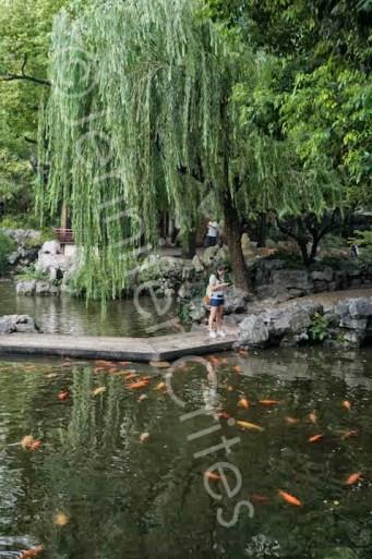 Yu Garden-02311