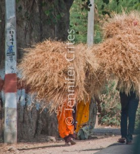Ranthambhore 423