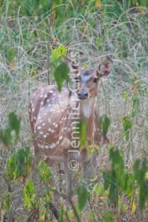 deer 331