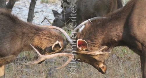 Ranthambore preserve 531